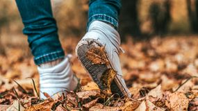 A man stops walking. The girl`s girlfriend`s. Hot girls on the nature in the park among the leaves of yellow. Autumn. A man stops walking. Movement of shoes a Stock Photos