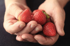 Man with strawberries in hands Stock Photos