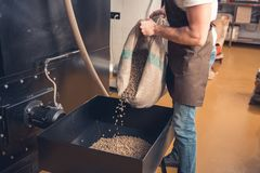 Male worker pouring coffee beans in case. Man strewing green grains from burlap sack in special container. Industry concept. Close up Stock Images
