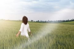 Man Striding through field of cereal plant. Young white dressed adult is striding through field of cereal plant and let flow his thoughts Royalty Free Stock Images