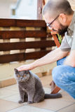 Man stroking british cat Royalty Free Stock Photography