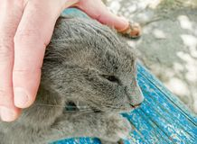 Man stroking street homeless cat. On a bench Royalty Free Stock Images