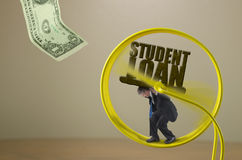 Man with STUDENT LOAN rock burden on hamster wheel showing financial struggle Royalty Free Stock Photos