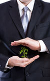 Man in a suit holding a plant Royalty Free Stock Image