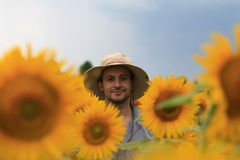 Man in sunflower field Stock Photos