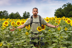 Man in a Sunflower Field Royalty Free Stock Photography