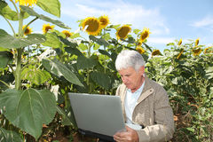 Man in sunflower field with laptop Stock Photo