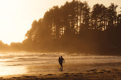 Man with surf walking on the the beach with forest behind while sunset. Silhouette of person and forest on sunset beach on Vancouver Island Stock Photography
