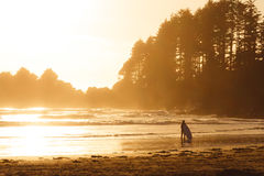 Man with surf walking on the the beach with forest behind while sunset. Silhouette of person and forest on sunset beach on Vancouver Island Stock Image