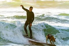 Man Surfing With his Dog royalty free stock photos