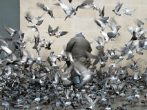 Man surounded by pigeons, Paris, France, 2012. Man surrounded by pigeons flying around him, Paris, France, 2012 Stock Photo