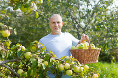 Man surrounded by  apple trees Stock Image