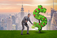 The man in sustainable investment concept. Man in sustainable investment concept Stock Images