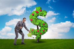 The man in sustainable investment concept. Man in sustainable investment concept Stock Photo
