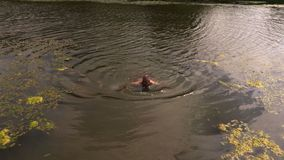 Man swim in pond. In summer day stock video footage