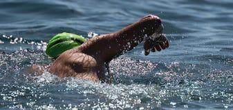 Man swimmer swimming crawl in blue sea. Training for triathlon Stock Images