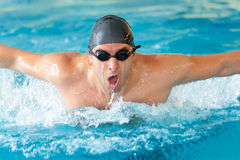 Man swimming butterfly strokes in competition. Wearing swimming goggles and cap Stock Image