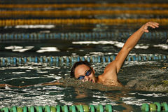 man swimming the front crawl in a pool Stock Images