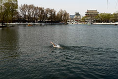 A man swimming in houhai lake of Beijing Royalty Free Stock Photos