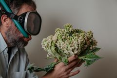 Man in swimming mask is holding  cauliflower. Cauliflower or coral. Comic story. A man with a beard and a swimming mask holds a cauliflower head in his hand like stock photography