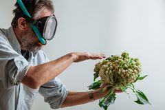 Man in swimming mask is holding  cauliflower. Cauliflower or coral. Comic story. A man with a beard and a swimming mask holds a cauliflower head in his hand like royalty free stock images