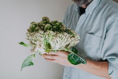 Man in swimming mask is holding  cauliflower. Cauliflower or coral. Comic story. A man with a beard and a swimming mask holds a cauliflower head in his hand like royalty free stock image