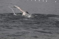 Man Swimming Royalty Free Stock Photos