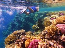 Man snorkeler swimming in the sea water near colorful coral reef royalty free stock photos