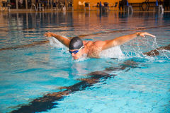 Man swims butterfly style in public swimming pool. Man swims butterfly style in indoor public swimming pool Stock Images