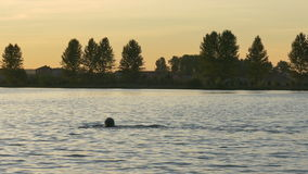 Man swims in the Lake during sunset stock footage