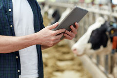 Man with tablet pc and cows on dairy farm. Agriculture industry, farming, people, technology and animal husbandry concept - man or farmer with tablet pc computer Stock Photos