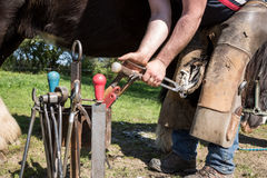 A man takes care of the horse`s hooves. A blacksmith treats the horse`s hoofs Royalty Free Stock Photos