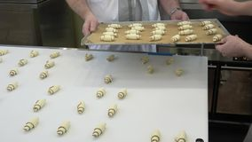 Man takes the croissants from the conveyor and puts them on the tray. Automatic bakery line working process. Man takes the croissants from the conveyor and puts stock video