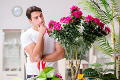 The man taking care of plants at home. Man taking care of plants at home Stock Photos