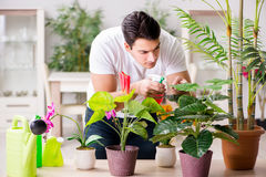 The man taking care of plants at home Stock Photos