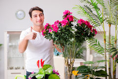 The man taking care of plants at home Stock Images