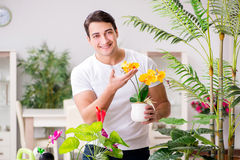 The man taking care of plants at home Royalty Free Stock Images