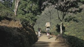 Man taking the cargo and backpacks up to the mountan,Bagage packer Sri Lanka, Southern Asia, Peak Adam - January 15. Man taking the cargo and backpacks up to the stock footage