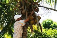 Cocconuts man Royalty Free Stock Image