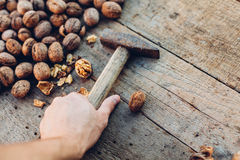 Man taking a hammer to crack walnuts Royalty Free Stock Images