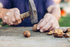 Man taking a hammer to crack walnuts Royalty Free Stock Image