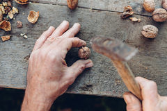 Man taking a hammer to crack walnuts Stock Image