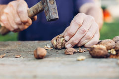 Man taking a hammer to crack walnuts Stock Photos