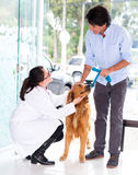 Man taking dog to the vet Royalty Free Stock Photography