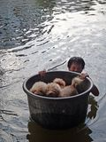 A man is taking his dogs to safety in a flooded street of Pathum Thani, Thailand, in October 2011. A man is taking his dogs to safety in a flooded street of royalty free stock photography