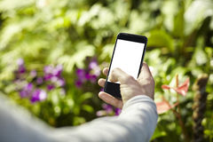Man taking photo picture by mobile phone in a travel journey, green plants in a park. Focused on phone screen. Blank screen space Royalty Free Stock Photos