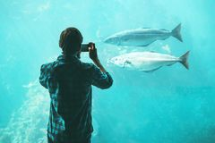 Man taking photo by smartphone of fish in big aquarium Stock Image