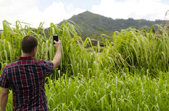 Man taking photo with smartphone. Man taking photo with smartphone of a mountain in Kauai Stock Photos