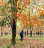 A man taking photos at the autumn forest in Kiengiang, Vietnam Royalty Free Stock Photos