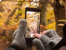 Man taking a picture with camera smart phone touch screen nature Royalty Free Stock Photo